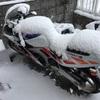 雪とマフラーと時々鼻水。