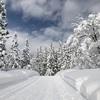 新潟県スキー選手権大会。