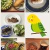 【33w3d】17/06/01の食事