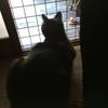 ご近所猫ちゃんとナルガ