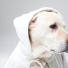 ネクスガード(大型犬用25~50kgノミやマダニを駆除する経口薬)毎回高いので最安値を半日かけて調べた