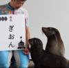 素敵なお名前ありがとう(*´∀`*) 水族館の動物赤ちゃんの命名まとめ