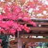 相楽園の紅葉②観光35R...過去20161129神戸