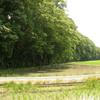 [河川][歴史] 昔の荒川探索行(9)古隅田川自然堤防の集大成「金山堤」