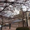 ★水無瀬駅の桜
