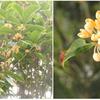 ひがんばなとさるすべりの花