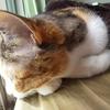 【愛猫日記】毎日アンヌさん#256