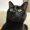 初代黒猫すみの命日