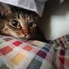要求鳴きが激しい猫でも大人しくなるタオルケット【秋冬限定】