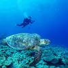 ♪慶良間で沖縄ダイビングライセンス取得おめでとう♪〜沖縄PADIオープンウォーター〜