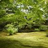 宝厳院の新緑を絞り開放で@2020(NOKTON 35mm F1.2 Aspherical SE)