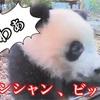 可愛い、シャンシャン!上野動物園