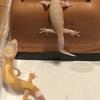 レプタイルズフィーバーに行ってきたので生体紹介とレオパの感想