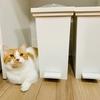 キッチンボードと冷蔵庫の隙間をガン見するるるちゃん。一体何が…?