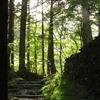 再訪西赤石山「下る道」