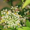 五月雨の中で、ひっそり咲き誇るこの花は?