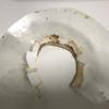 フクロモモンガ用エリザベスカラーを手作り・自作するためのメモ