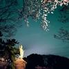 掃部山公園の桜見てきた!