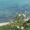 島武意海岸でお手軽に積丹ブルーを堪能する。