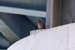9/25(水)の朝の鳥見