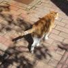 暖かな陽射しに心躍る気ままな猫ちゃんたち①からのコインランドリー