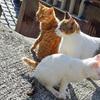 3月7日(水)もう一つの酒場の饒舌おじさんと、テレビ番組を見て思い出した島の猫。