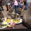 タイの村で野生の猿の誕生日パーティーがあります