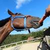 兵庫県で夏休みに馬に乗ったりさわりたいなら三木のココ!