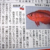周防大島沖で南の魚