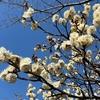 昭和記念公園の早春の花と小鳥。