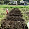 春野菜?の植え付け