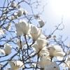 【52の宿題】week2:空を入れて爽やかな花写真を撮ってみよう