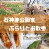 【ぶらりん散歩】キャッキャウフフな花見ができないので、石神井公園をぼっち散策してきた