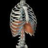 腰椎を安定させる ポイント2腹腔内圧を高め維持する