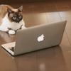 ブログの更新頻度と記事の中身や収益の考察を語ります