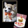 Happy 12th Birthday!  Orb!!