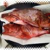 カサゴ三昧。伊良湖水道のカサゴの刺身は絶品。