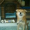 山の神にいた犬(2)