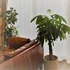室内ジャングル化計画を実行中。我が家の観葉植物を紹介します。