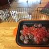 トマトミートボールを信州鹿肉で