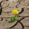 【プランター】古くなった土の再生について