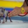 動物病院の選び方!獣医師によって変わる判断方法