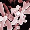 乳酸菌のデメリットと回避する方法《アトピー用の乳酸菌サプリメント》