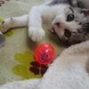 #世界猫の日