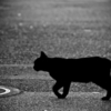 私には見えない 猫 さん①~ 霊能者 に会った時の話~