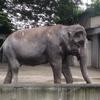 2014/08/29 part1 井の頭自然動物園