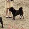 甲斐犬サンのドッグショーチャンピオンへの道〜其の弐、モウ帰ッテイイデスカ?( T_T)⁈