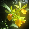 筑波実験植物園・つくば蘭展