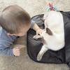 新生児・赤ちゃんと猫の同居の注意点・気をつけていること4つ!工夫とメリットも紹介
