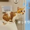 GW恒例。本日は一年に一度の愛猫のお風呂Dayです。
